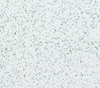 02. F8900 HG Reflexions White Pfleiderer